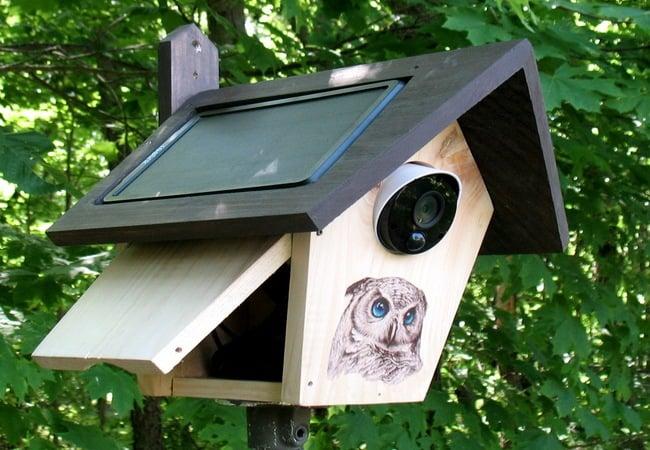 دوربین نظارت بر پرندگان