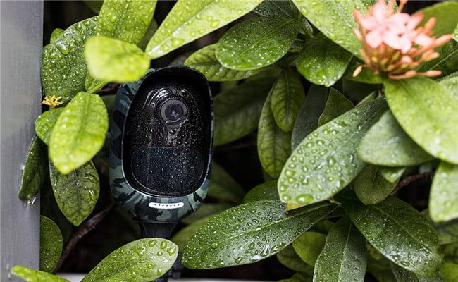 مخفی سازی دوربین مداربسته با پوشش گیاهی