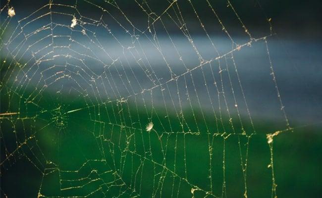 spider-web-min